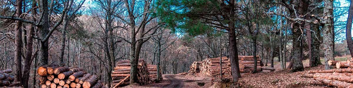 Comercialización de la madera